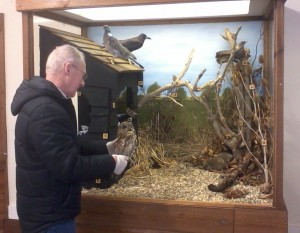 Technician Colin, removing an owl from its display case for freezing.